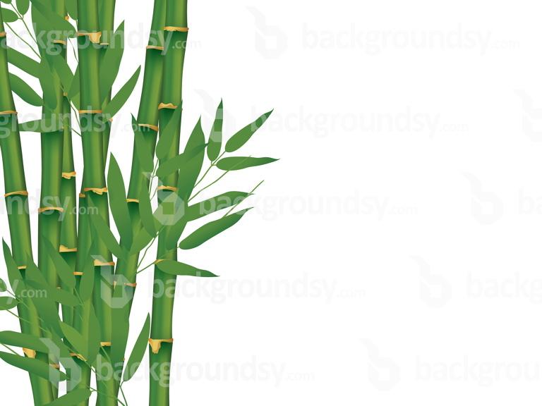 Bamboo isolated